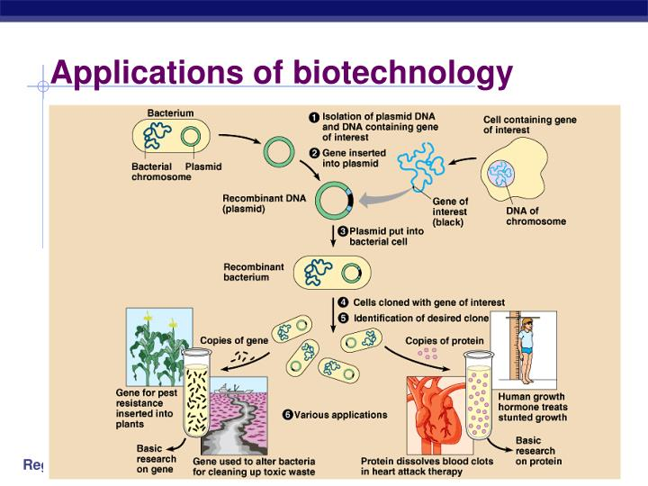 Application of plant genetic engineering ppt